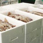¿Cómo se escoge la frescura del Pescado?